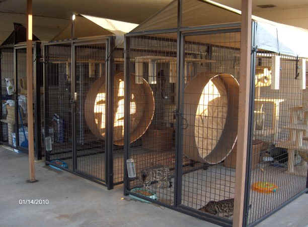 our cattery picture to pin on pinterest   pinsdaddy